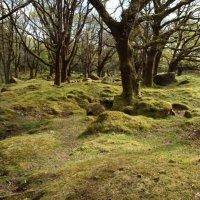 Zážitky z cínařské oblasti Dartmoor v Anglii