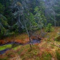 Napříč Slavkovským lesem