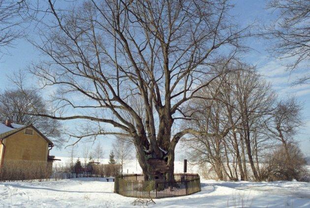 Památné a významné stromy Karlovarského kraje se zvláštním zřetelem k Chebsku