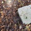Žlutice - Železná muka | torzo železného kříže nazývaného Železná muka při silnici na Čichalov - září 2015