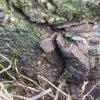 Horní Tašovice - Russenský kříž | torzo ulomeného železného vrcholového kříže v horní ploše kamenného podstavce - březen 2017