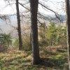 Chyše - hradiště | severozápadní konec ostrožny porostlý smíšeným lesem ve vnitřní ploše bývalého hradiště - březen 2016