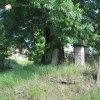 Herstošice - železný kříž | zchátralý neudržovaný železný kříž s ohrazení pod mohutným jasanem na návsi v Herstošicích - září 2013