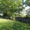 Luka - židovský hřbitov | jižní ohradní zeď zdevastovaného hřbitova - září 2013