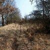 Radošov - hradiště Jazyk (Stengelberg) | neudržovaná plocha vlastního hradiště - březen 2014