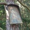 Protivec - obraz Panny Marie   zchátralý obraz Panny Marie na kmeni borovice u Protivce - červenec 2015