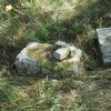 Skoky - kamenný kříž | rozvalený kamenný kříž při cestě do Polomi severně od bývalých Skoků - září 2015