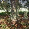 Skoky - železný kříž | zchátralý podstavec pod dvojici mohutných kaštanů nad zaniklou vsí Skoky - září 2015