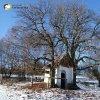 Krásno - kaple Panny Marie Sněžné | zchátralá kaple Panny Marie Sněžné pod dvojicí mohutných kaštanů v polích nad Krásnem - prosinec 2013