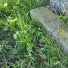 Semtěš - pískovcový kříž | část rozvaleného podstavce pískovcového kříže v lesíku uprostřed polí - duben 2016