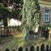 Údolí - pomník obětem 1. světové války | břečťanem porostlá kamenná stéla - září 2016
