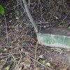 Žlutice - železný kříž | pískovcová základová deska podstavce na původním místě při silnici na Chyše na jihovýchodním okraji Žlutic - září 2015