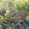 Močidlec - Mikuttův kříž | zadní strana poškozeného kamenného soklu Mikuttova kříže u Močidlece částečně zahrnutého zeminou - duben 2016