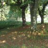 Bošířany - kaple sv. Anny | rozvaliny zbořené obecní kaple sv. Anny pod skupinou stromů na bývalé návsi v Bošířanech - září 2016