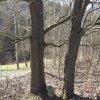 Kozlov - Schwarzmichlův kříž | podstavec Schwarzmichlova kříže mezi dvojicí javorů - březen 2017