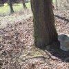 Kozlov - Schwarzmichlův kříž | torzo Schwarzmichlova kříže mezi dvojicí vzrostlých javorů na bývalém rozcestí u kozlovského hřbitova - březen 2017