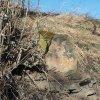 Těšetice - železný kříž | patka podstavce zničeného kříže - březen 2017