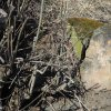 Těšetice - železný kříž | rozlomená patka pískovcového podstavce zničeného železného kříže u Těšetic - březen 2017