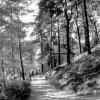 Jáchymov - kaple sv. Barbory | Lesní kaple - kaple sv. Barbory v roce 1947