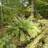 Velichov - tvrz | lokalita silně zarostlá vegetací a vzrostlým lesem  - říjen 2013