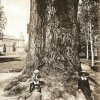 Dalovice - Körnerův dub | Körnerův dub v zámeckém parku v době kolem roku 1914