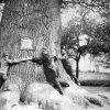 Dalovice - Korneruv dub | KKörnerův dub na historické fotografii z doby kolem roku 1895