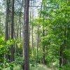 NPP Skalky skřítků | lesní partie NPP Skalky skřítků - červenec 2009
