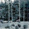 Šemnická skála - lesní restaurace a kavárna | bývalá hájovna, později lesní restaurace a kavárna pod Šemnickou skálou kolem roku 1938