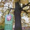 Drahovice – Mozartův dub | kmen památného stromu - říjen 2009