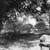 Popov - Dolní popovská lípa | Dolní popovská lípa na historické fotografii z roku 1925