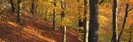 Karlovarský podzim