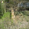Žlutice - kaple Panny Marie | trosky kaple Panny Marie při bývalé lesní cestě - duben 2012