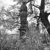 Vladořice - socha sv. Jana Nepomuckého | socha sv. Jana Nepomuckého v 80. letech 20. století