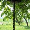 Pšov - Rösslův kříž | novodobý litý vrcholový kříž - květen 2017