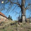 Herstošice - železný kříž | železný kříž s obnoveným ohrazením  pod mohutným jasanem na návsi v Herstošicích po celkové rekonstrukci - březen 2017