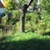 Jeřeň - tvrz | zarostlý příkop v severozápadní části lokality - září 2013