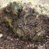 Dubina - tvrz | pozůstatky kamenného zdiva gotické tvrze - březen 2014