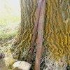 Kolešov - Polní kříž | zbytky rozlámeného litinového kříže - duben 2014