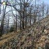 Záhořice - hradiště Vladař | obvodové opevnění akropole hradiště v podobě rozvalené hradby do mohutných kamenných valů - březen 2014