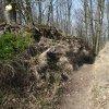 Záhořice - hradiště Vladař | novodobý průkop severním obvodovým valem akropole hradiště Vladař - březen 2014