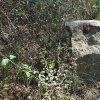 Skoky - Lienerthův kříž | zadní strana rozlomeného podstavce Lienerthova kříže v zaniklé vsi Skoky - září 2015