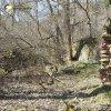 Sovolusky - Rohrerův mlýn | torzo bývalé stodoly či kolny na východním okraji areálu zaniklého Rohrerova mlýna u Sovolusk - březen 2017