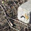 Dolní Valov - boží muka | železný kovaný trv v horní ploše dříku božích muk u Dolního Valova - březen 2017