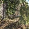 Horní Tašovice - Diamlský kříž   podstavec Diamlského kříže nad bývalou úvozovou cestou nad Horními Tašovicemi - březen 2017