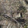 Údrč - Fischertonlův kříž | rozvalený podstavec Fischertonlova kříže na vrchu Krähenhübel nad vsí Údrč - březen 2017