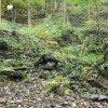 Telcov - mlýn Geigenmühle   zřiceniny mlýna Geigenmühle v údolí potoka Bublava u zaniklé vsi Telcov - říjen 2020