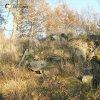 Maleš - kaple   trosky na svahu pod pobořenou kamennou kaplí u zaniklé vsi Maleš - listopad 2020