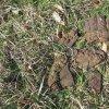Brložec - železný kříž | fragmenty rozlámeného vrcholového litinového kříže - duben 2016