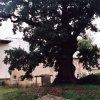 Dalovice - tvrz | tvrziště v Dalovicích - podzim 2008