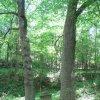 Lipoltov (Hradiště) - železný kříž   sokl kříže u dvojice stromů - červen 2010